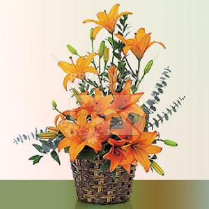 13-pomaranczowe-ozezwienie