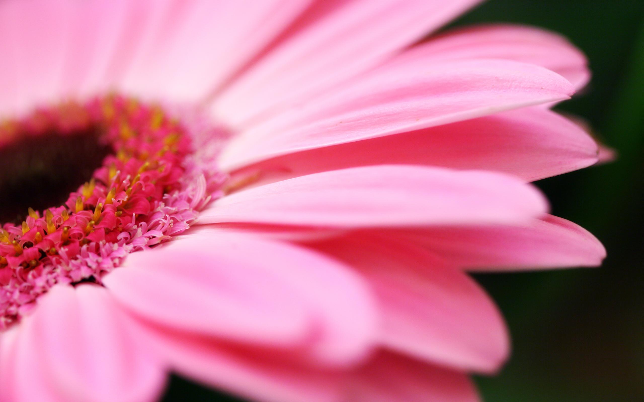 16413_flowers